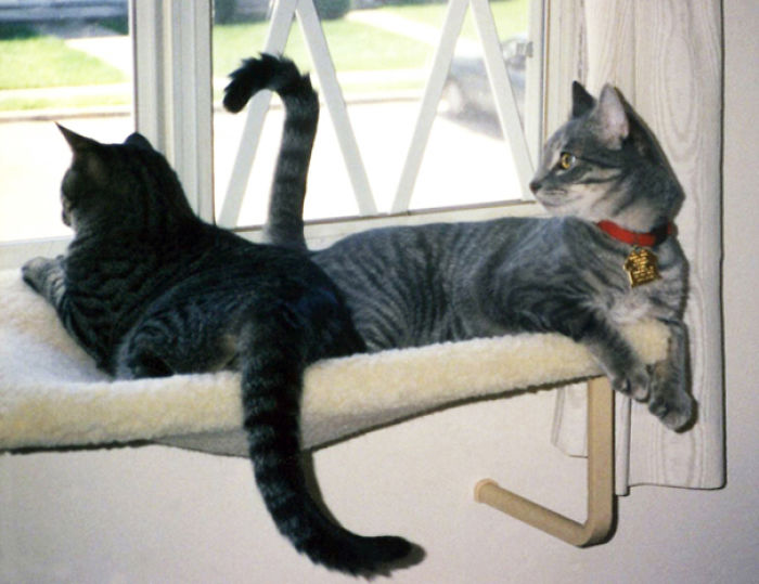 Sophie & Tyler Enjoying The Window Seat