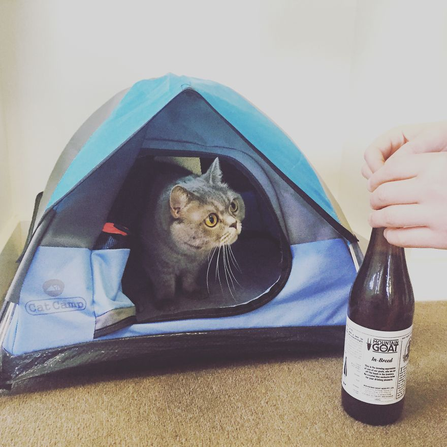 What. A. Day. Crack open a few I think weu0027ve earned it. & Tiny Tents For Cats! | Bored Panda