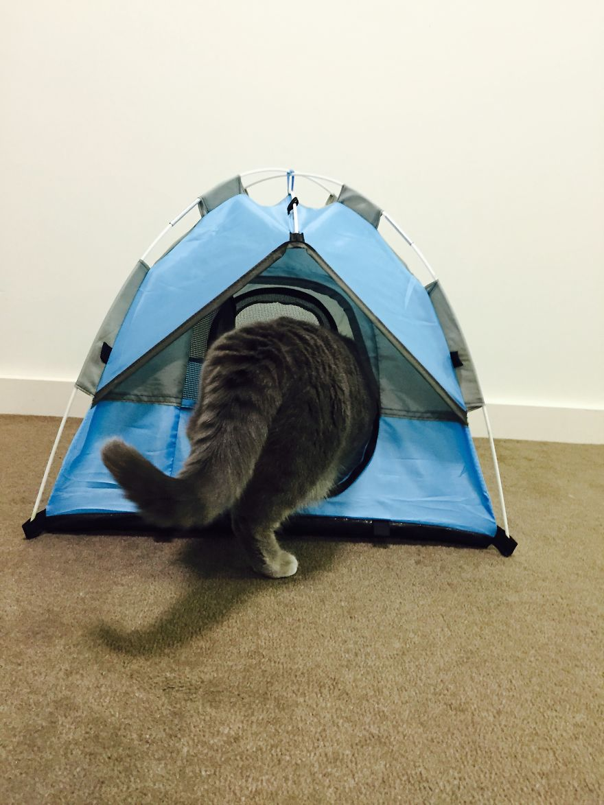 Well thatu0027s enough excitement for one day. & Tiny Tents For Cats! | Bored Panda