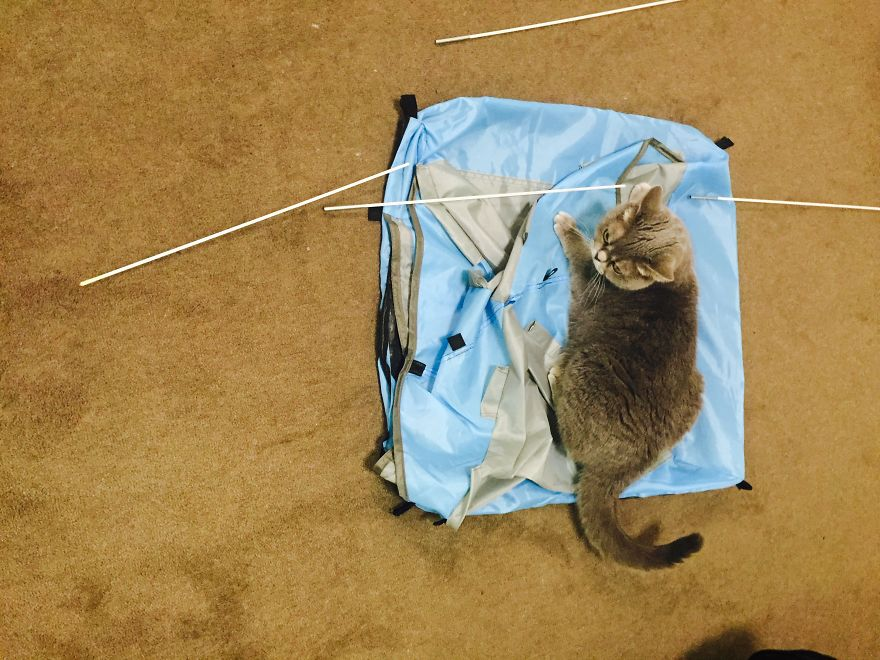 Do you wanna build a cat c&? & Tiny Tents For Cats! | Bored Panda