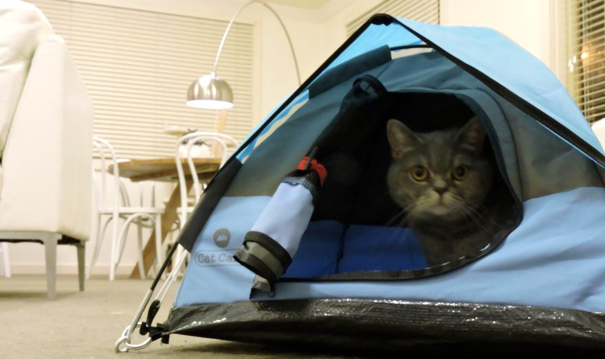 In THESE woods? Creepyu2026 & Tiny Tents For Cats! | Bored Panda
