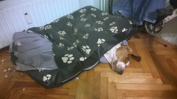 Buy Me A New Dog Bed, I Don't Like This One On The Inside...