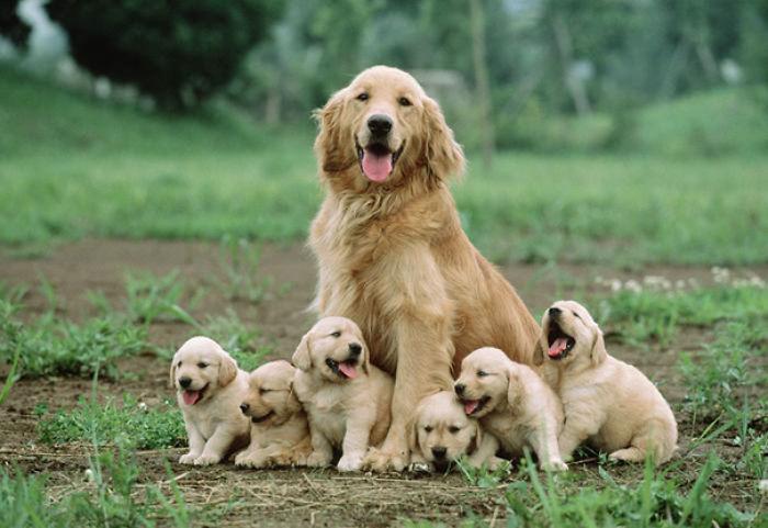 Seis Dulces Cachorros Sentados Junto A Su Madre