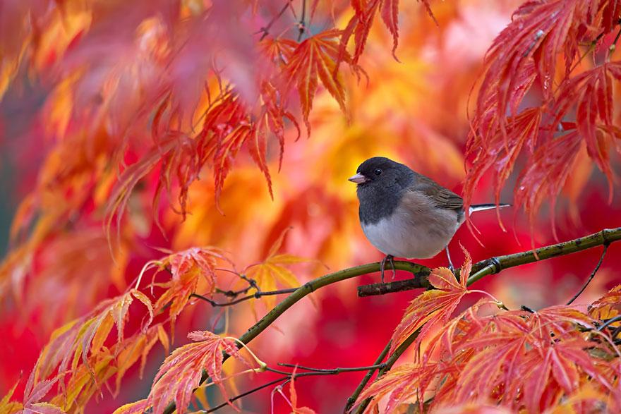 Autumn Animals