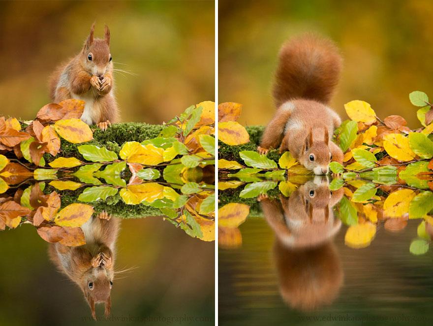 Animais do outono