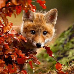 15+ Animals Enjoying Autumn Magic