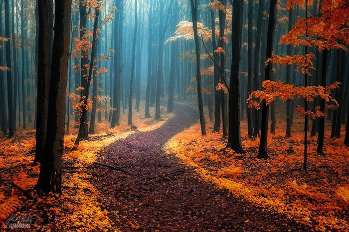 Dream-Like Autumn Forests By Czech Photographer Janek Sedlář