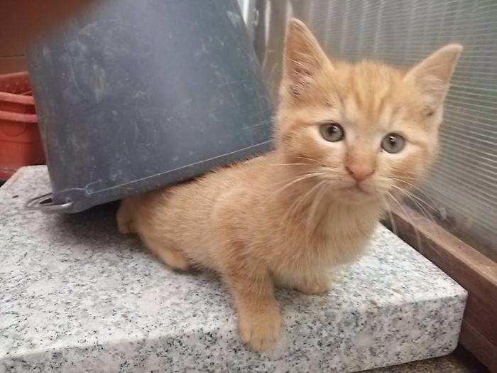 Baby Cat Under A Bucket