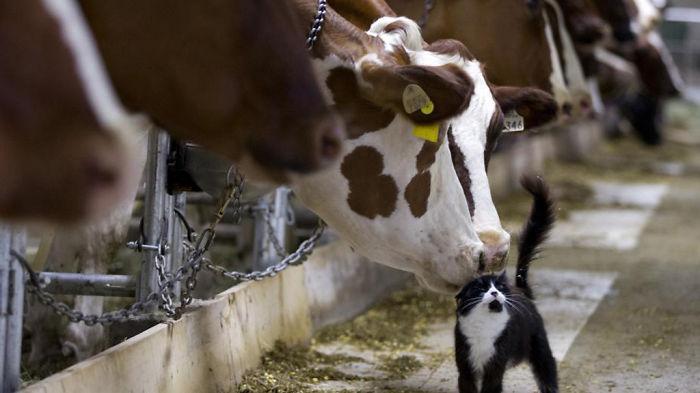 Big Love Between Animals