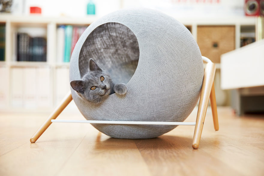 cat-cocoon-meyou-sanchez--gadenne-17