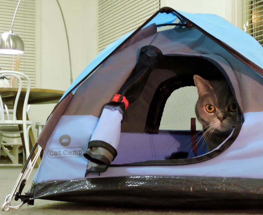 But itu0027s cold out there. Here is good too. & Tiny Tents For Cats! | Bored Panda