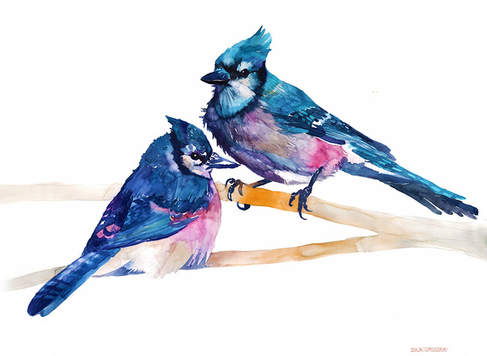 Colorful Birds Painted With Watercolors By Maja Wronska