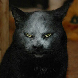 This Cat Got Covered In Flour And Now Looks Like A Demon