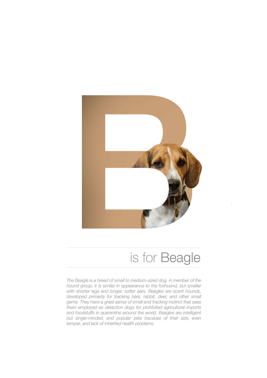 B Is For Beagle