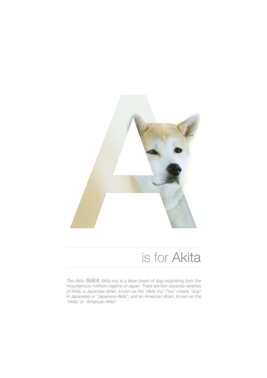 A Is For Akita