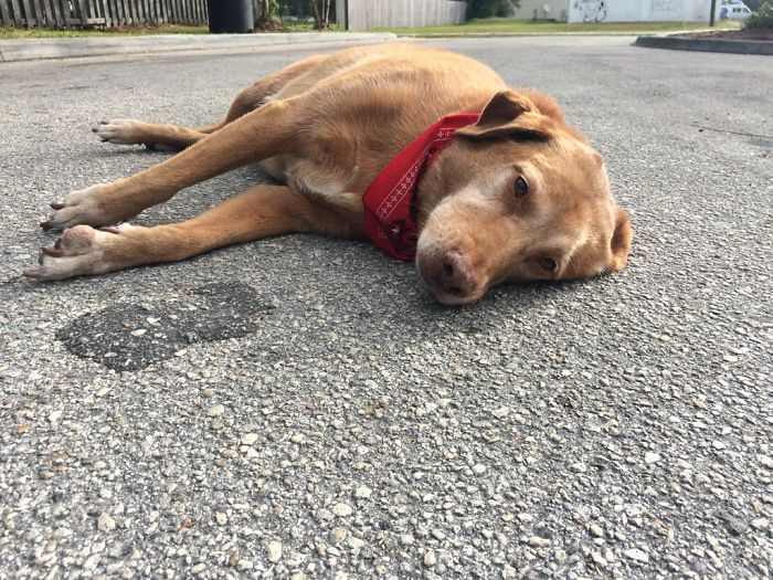 Loyal Dog Lies For Hours In Exact Place Where Owner Was Killed In Hit-And-Run