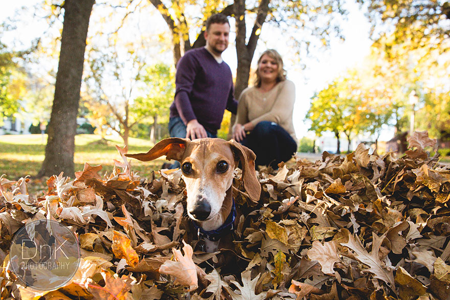 dog-photobombs-engagement-photos-karin-berdal-1