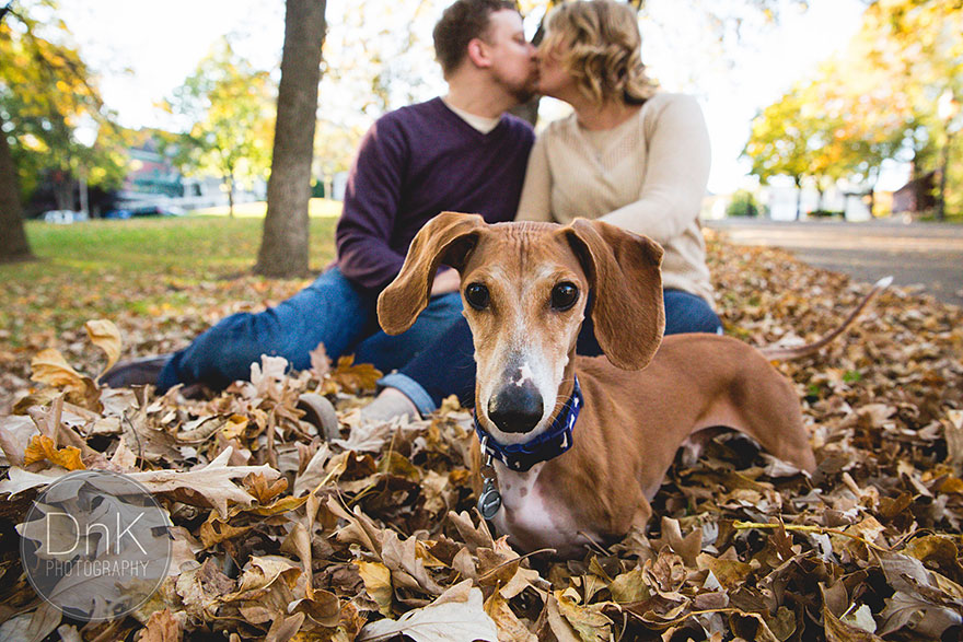 dog-photobombs-engagement-photos-karin-berdal-3