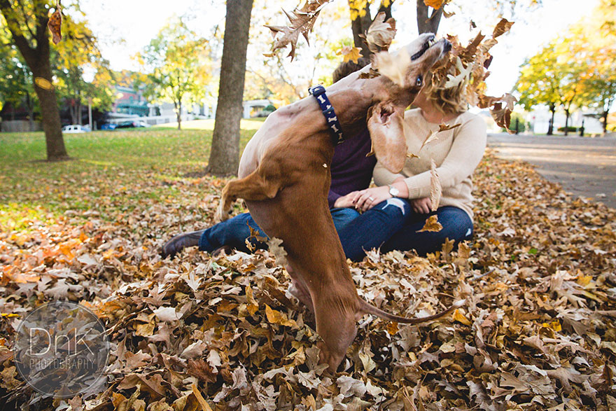 dog-photobombs-engagement-photos-karin-berdal-4