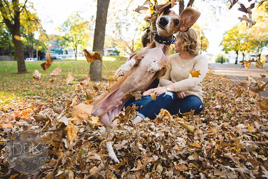dog-photobombs-engagement-photos-karin-berdal-6