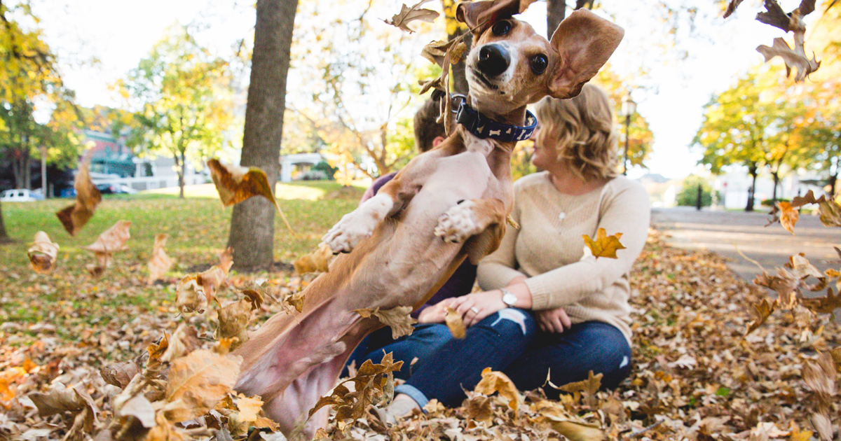 Wiener Dog Totally Photobombs Couple's Engagement Photos