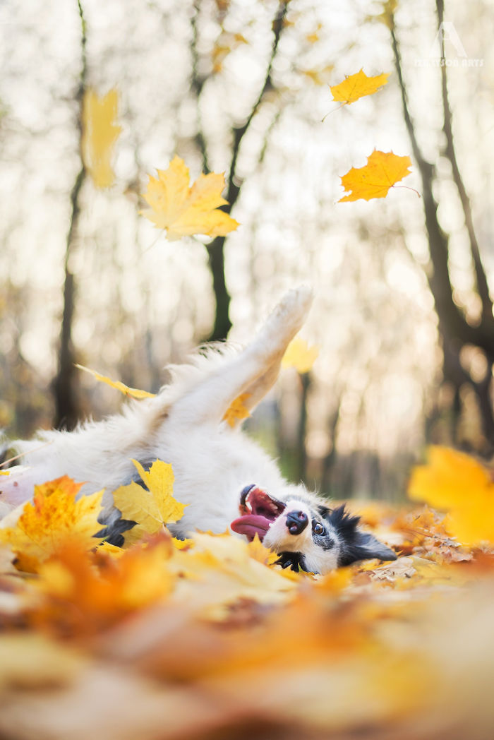 Dog Playing With Leaves