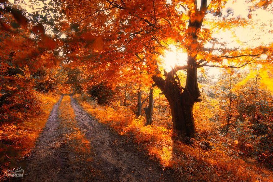 Фотогалерея: неверотяно красивые осенние леса