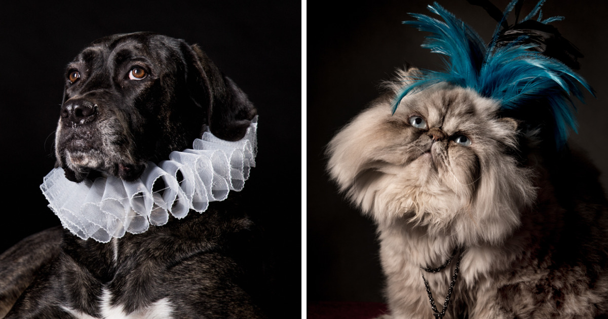 I Photograph Animals Looking As Noble Men From Classical Paintings