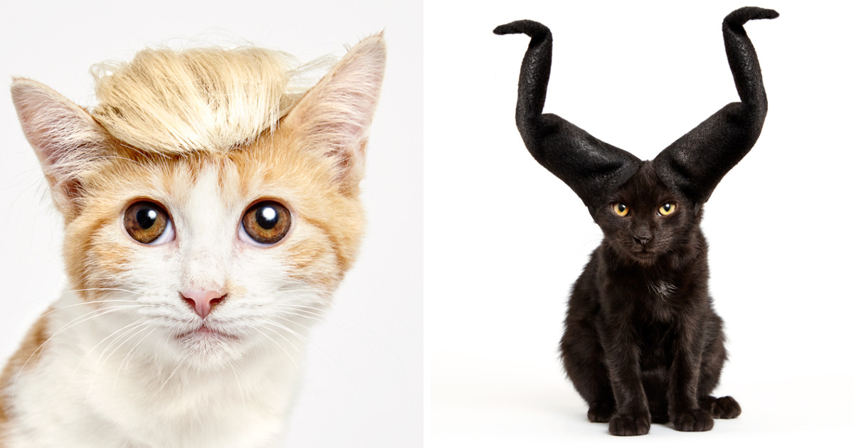Cats With Fancy Hats