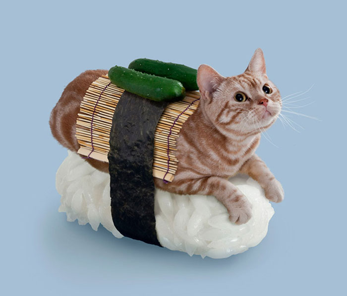 Cats Dressed In Comical Costumes Are Actually Sushi Rolls