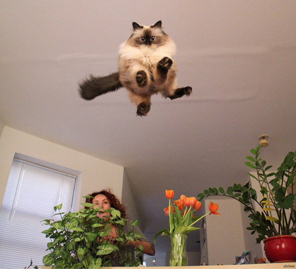 The Flying Cat Is Prepared For Landing