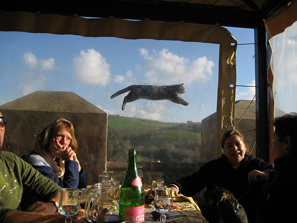 I Found A Flying Cat