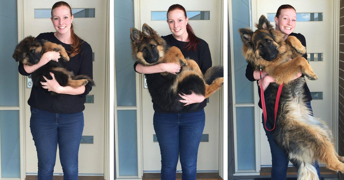 Couple Documents How Fast Their Dog Grows In Just 8 Months Bored Panda