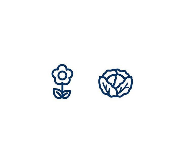 Cauliflower (Blómkál) = Flower + Cabbage