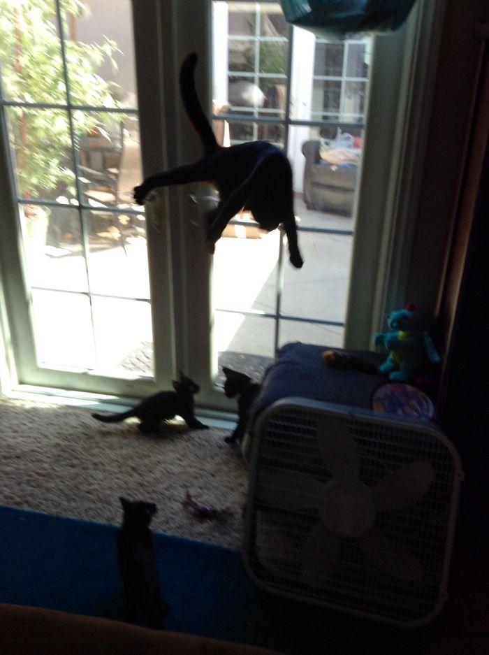 Springy Cat