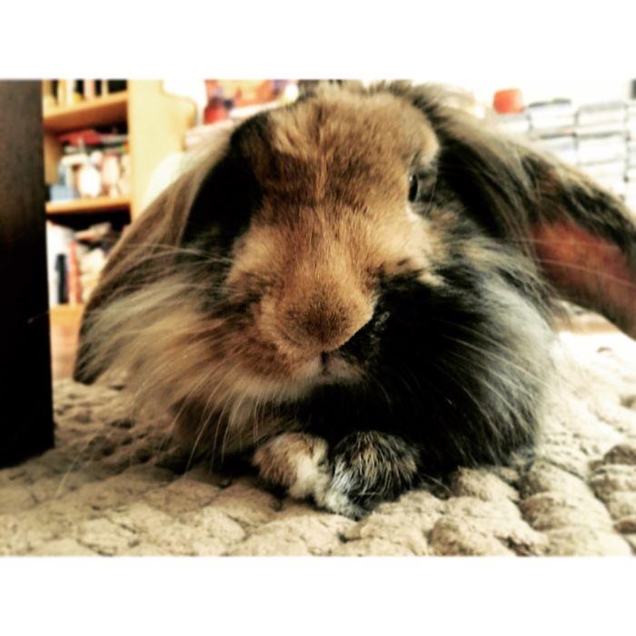 I'm A Pretty Bunny!