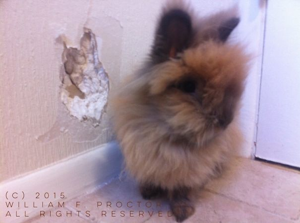 "Winifred Rabbit - Self Portrait (2015) - Teethmarks In Wallpaper, Drywall - 6""x6"" - $500.00 Obo"