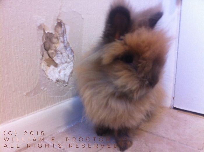 Winifred Rabbit – Self Portrait (2015) – Teethmarks In Wallpaper, Drywall – 6″x6″ – $500.00 Obo