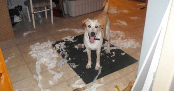 I Left My Dog Alone At Home For 20 Minutes, Came Home And Found This Mess!