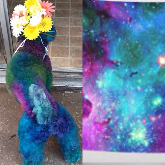 I Groom Dogs To Look Like Nebulas.