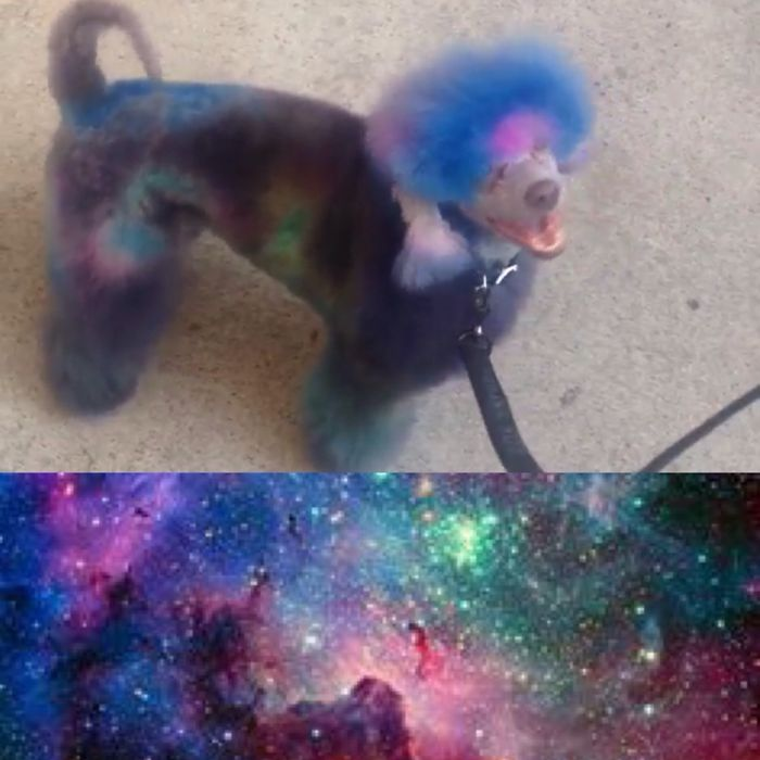 Nebula Dog.