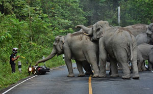 Man Apologizes To Elephants After Disturbing Them With Motorbike In Thailand