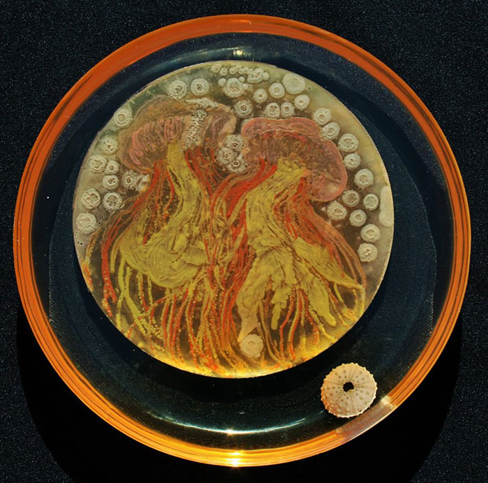 microbe-art-petri-dish-agar-contest-van-gogh-starry-night-american-society-microbiologists-38