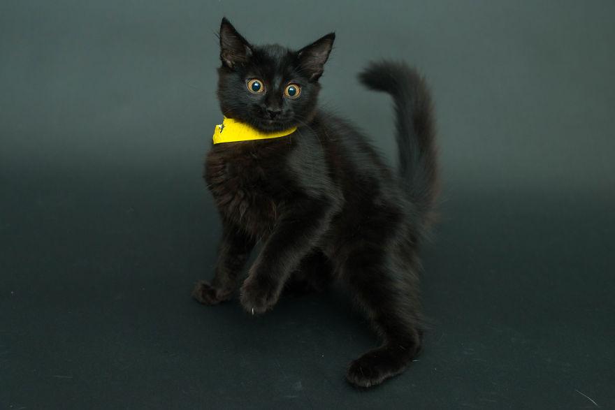 Čierne mačky z útulku nikto nechce, preto sa ich rozhodol fotografovať
