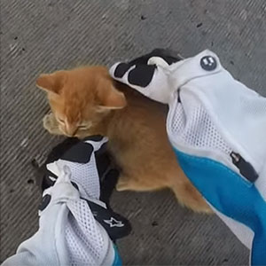 Motorcyclist Rescues Tiny Kitten Stuck On Busy Road
