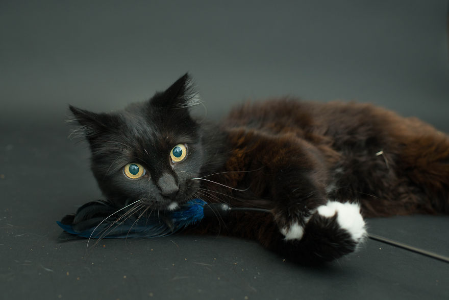 I Photograph Black Shelter Cats Because They're The Last To Get Adopted And Are Often Euthanized