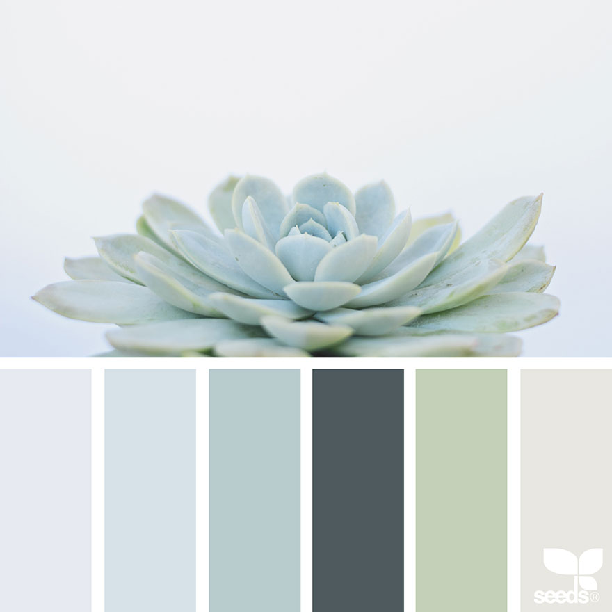 Nature inspired color palettes aka design seeds for for Bedroom inspiration color palette