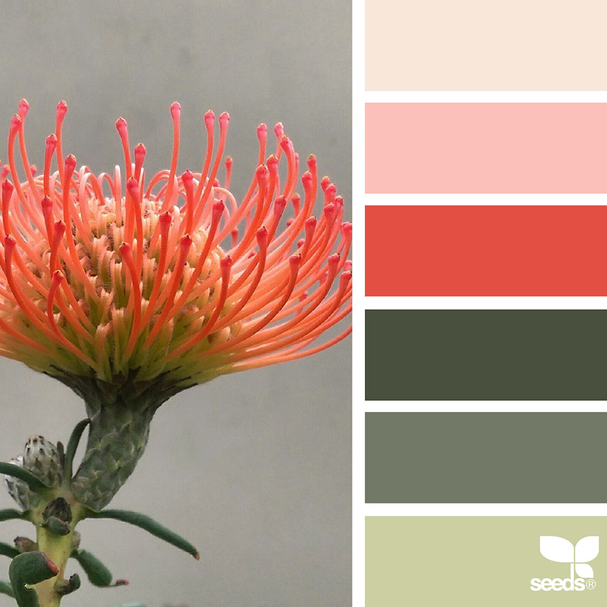 nature-colors-palette-design-seeds-jessica-colaluca-14