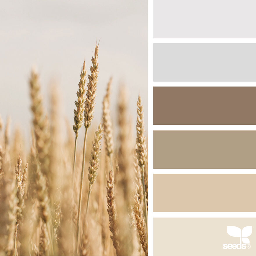 nature seeds palette colors palettes inspired tones field natural scheme colaluca jessica aka designers aesthetic boredpanda paint decorators crafters combination