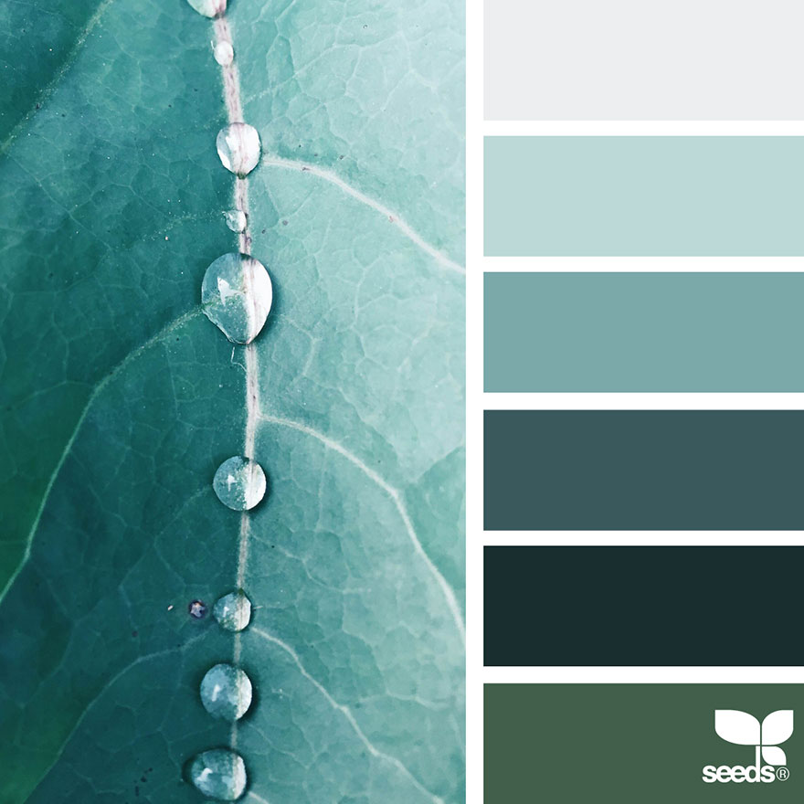Nature Inspired Color Palettes AKA Design Seeds For Designers